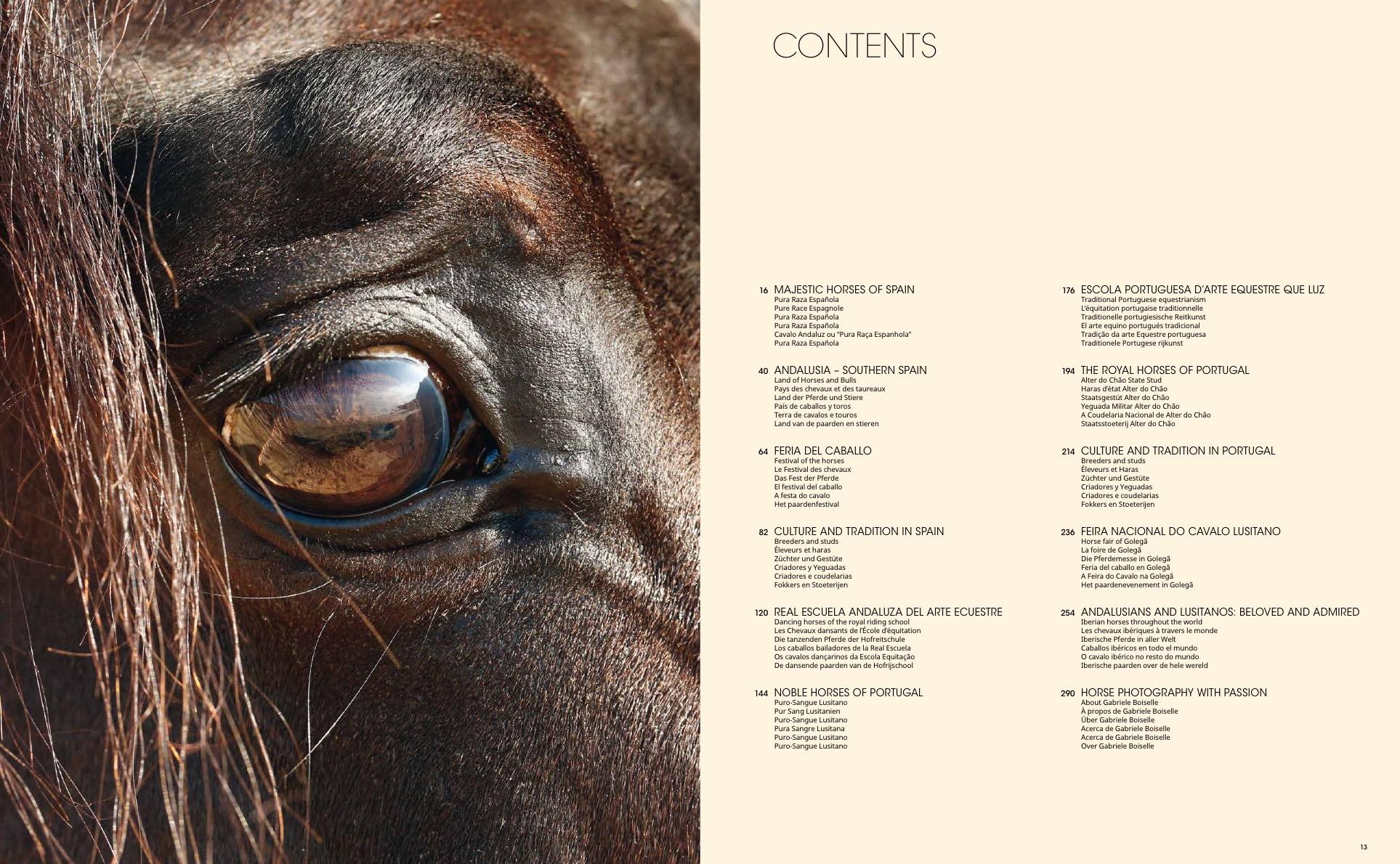 Andalusians & Lusitanos - Iberian Horses